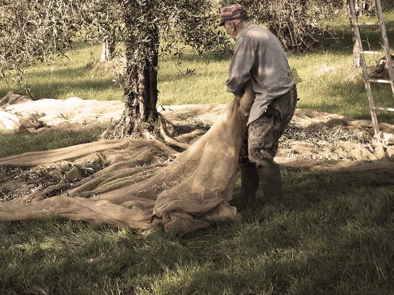 Frantoio San Gimignano - produzione olio extra vergine di alta qualità